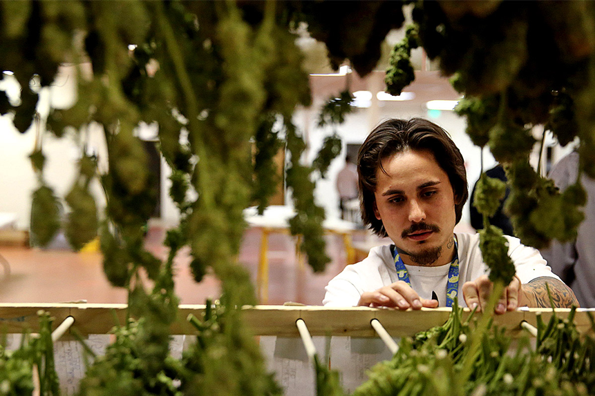 AdvisorShares Pure Cannabis ETF heats up on US legislation support