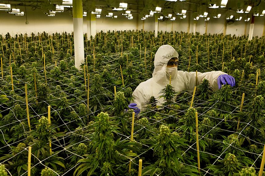 The ETFMG Alternative Harvest ETF gains ground despite US cannabis legislation