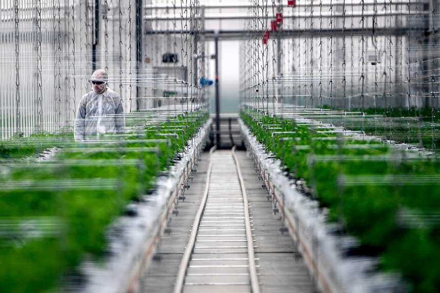 Will Tilray's share price continue to light up?