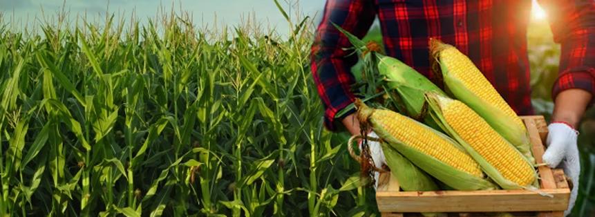 Corn Seasonality Analysis
