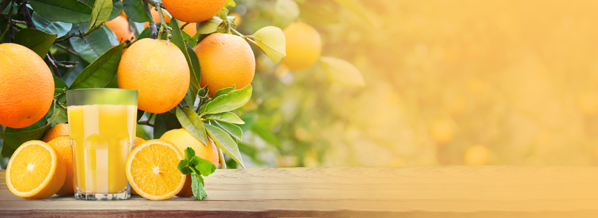 Orange Juice Seasonality Analysis November rally on the cards?