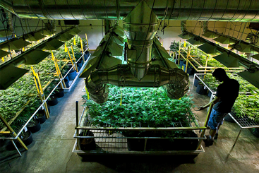 What does the flourishing cannabis sector mean...