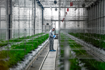 Can the Tilray share price benefit from...